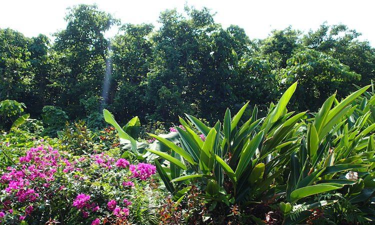石垣島鍾乳洞の植物