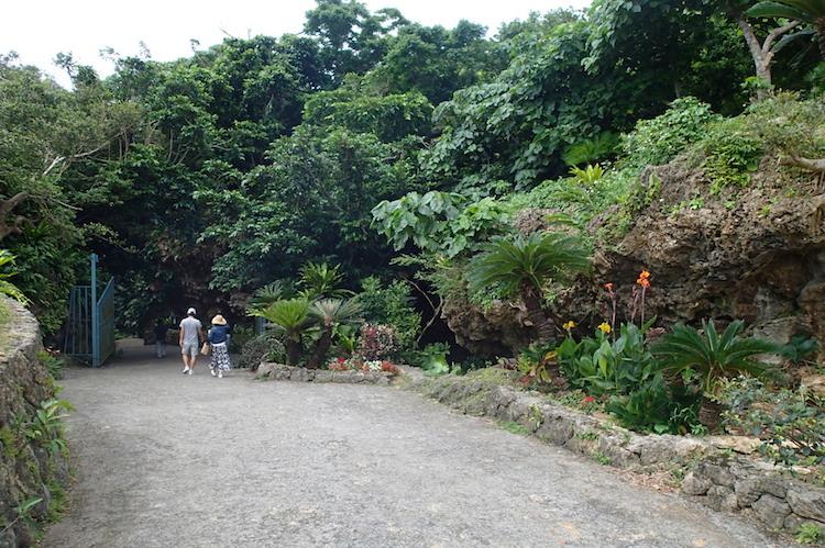 石垣島の伊原間サビチ洞の木々