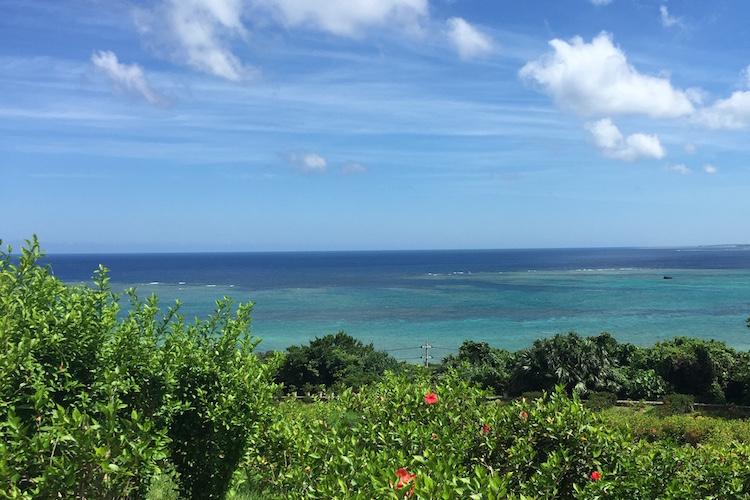 石垣島の玉取展望台のハイビスカス