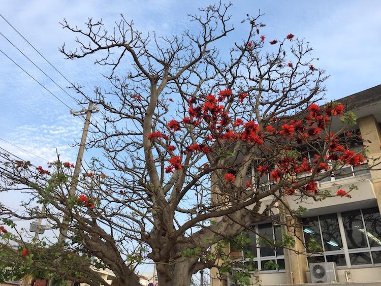 沖縄の県花デイゴの花