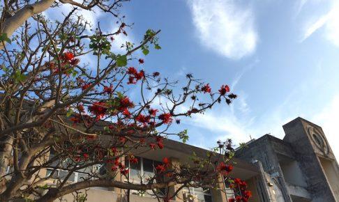 沖縄の県花デイゴの花と空